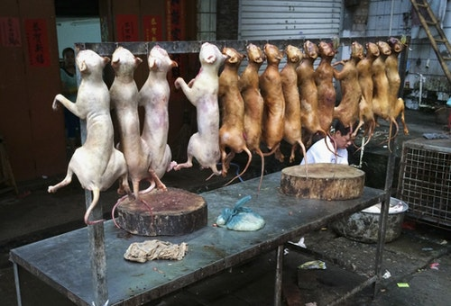 Dead dogs are on sale at a stall, ahead of the dog meat festival in Yulin